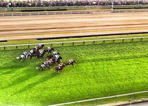 Horse racing, Grass, Race track, Sport venue, Animal sports, Racing, Sports, Grassland, Jockey, Plant,
