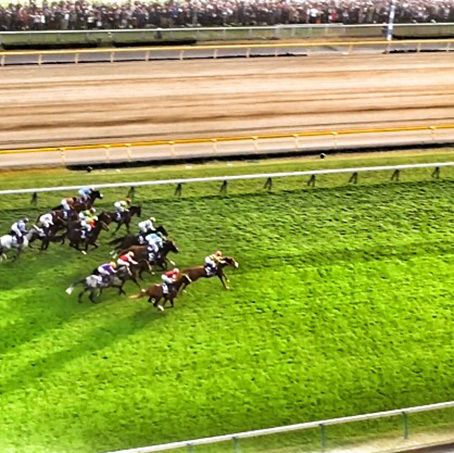 Horse racing, Grass, Sport venue, Race track, Grassland, Animal sports, Racing, Sports, Jockey, Plant,