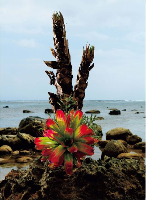 Flower, Vegetation, Plant, Botany, Sea, Rock, Shore, Tree, Coast, Ocean,