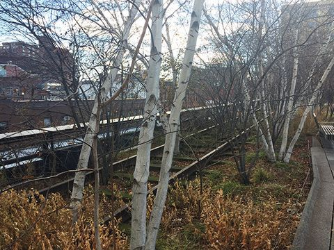 Tree, Woody plant, Transport, Plant, Branch, Canoe birch, Twig, Fence, House, Winter,