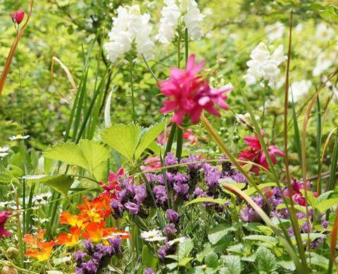 Flower, Flowering plant, Plant, Botany, Wildflower, Grass, Spring, Primula, Herbaceous plant, Shrub,