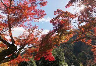 Tree, Leaf, Nature, Natural landscape, Red, Woody plant, Sky, Vegetation, Plant, Autumn,