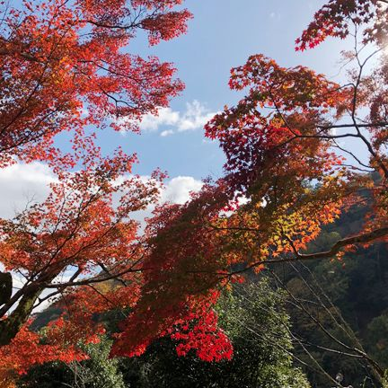 Tree, Leaf, Sky, Red, Nature, Autumn, Woody plant, Branch, Plant, Deciduous,