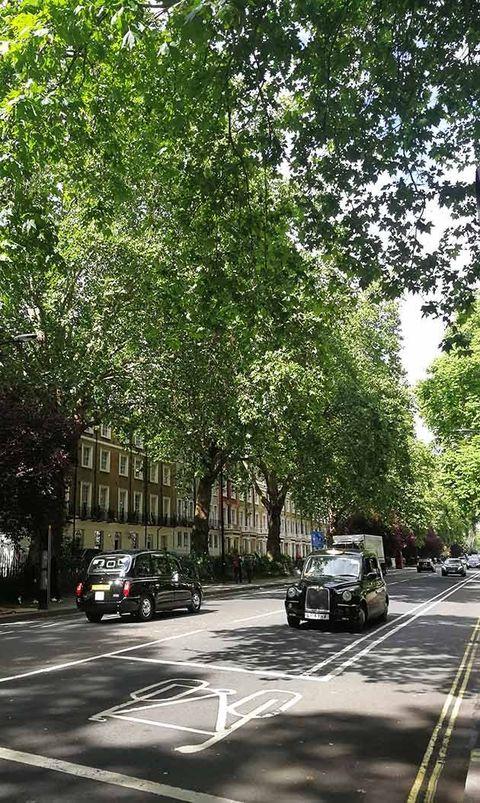 Tree, Neighbourhood, Road, Woody plant, Urban area, Street, Mode of transport, Plant, Transport, Lane,