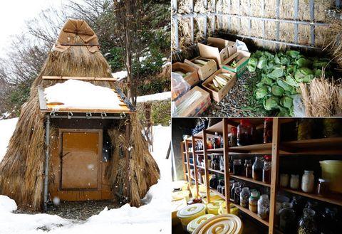 Tree, Hut, Tree stump, Adaptation, House, Plant, Winter, Trunk, Tree house, Building,