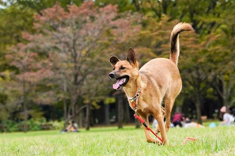 Dog, Mammal, Vertebrate, Canidae, Dog breed, Carnivore, Wildlife, Sporting Group, Jumping, Companion dog,