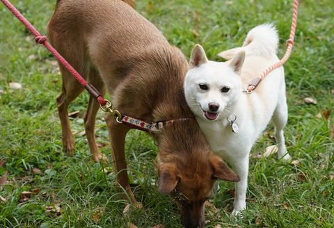 Dog, Mammal, Vertebrate, Dog breed, Canidae, Carnivore, Grass, Rare breed (dog), Sporting Group, Hunting dog,