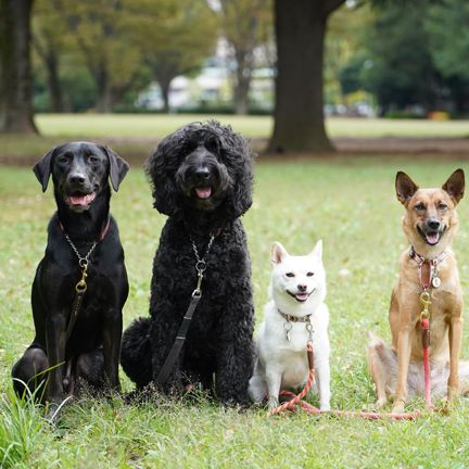 Dog breed, Dog, Carnivore, Vertebrate, Sporting Group, Companion dog, Dog supply, Pet supply, Snout, Working animal,
