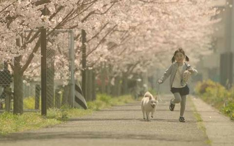 People in nature, Walking, Dog walking, Tree, Spring, Branch, Flower, Dog, Blossom, Plant,