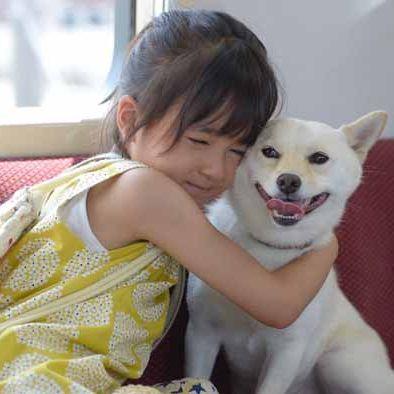 Mammal, Dog, Vertebrate, Canidae, Dog breed, Carnivore, Akita inu, Companion dog, Nose, Puppy love,