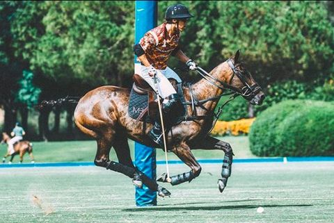 Horse, Bridle, Sports, Rein, Animal sports, Horse supplies, Polo, Horse tack, Halter, Saddle,