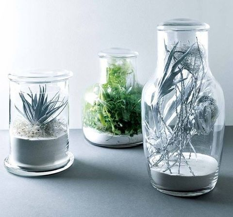 Glass, Organism, Transparent material, Serveware, Herb, Silver, Aquarium decor, Food storage containers, Perennial plant, Transparency,