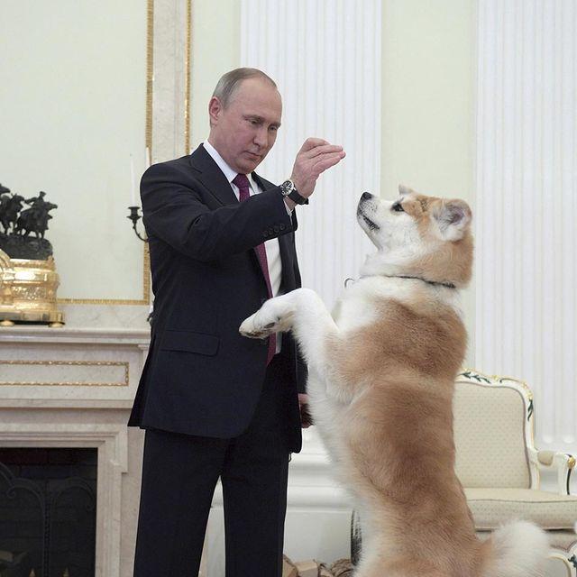 Human, Vertebrate, Dog breed, Suit trousers, Dog, Suit, Formal wear, Carnivore, Companion dog, Blazer,