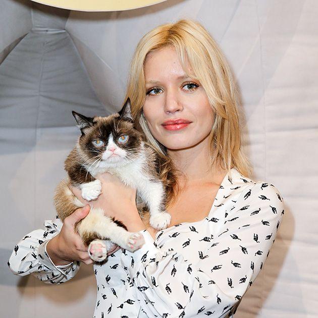 Cat, Felidae, Small to medium-sized cats, Carnivore, Whiskers, European shorthair, Norwegian forest cat, Fur, Kitten, Brown hair,