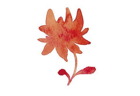 Leaf, Red, Tree, Plant, Flower, Woody plant, Flowering plant, Maple leaf, Petal, Black maple,