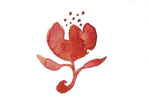 Heart, Botany, Leaf, Plant, Flower, Illustration, Love,