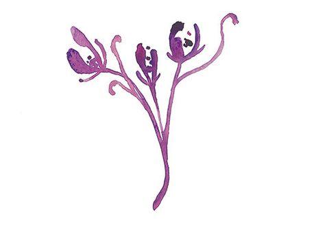 Flower, Plant, Violet, Botany, Pedicel, Flowering plant, Crocus,