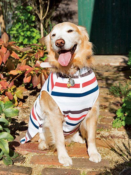 Dog, Mammal, Vertebrate, Dog breed, Canidae, Dog clothes, Golden retriever, Carnivore, Companion dog, Sporting Group,