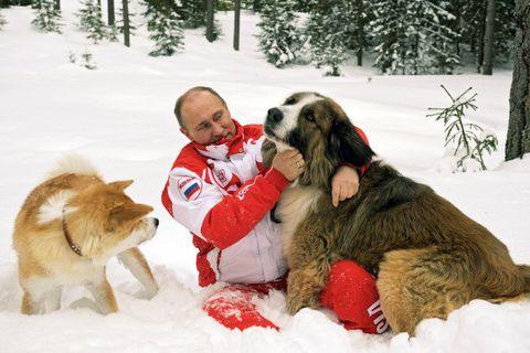 Dog, Mammal, Vertebrate, Canidae, Moscow watchdog, Snow, Carnivore, Dog breed, St. bernard, Winter,