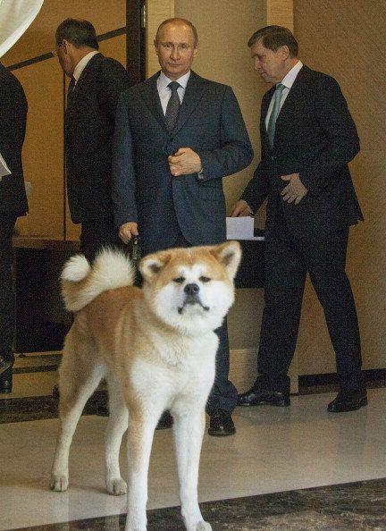 Dog, Mammal, Vertebrate, Canidae, Dog breed, Carnivore, Akita, Akita inu, Ancient dog breeds, Shiba inu,