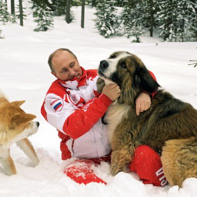 Dog, Mammal, Vertebrate, Canidae, Moscow watchdog, Carnivore, Snow, Dog breed, Winter, Playing in the snow,