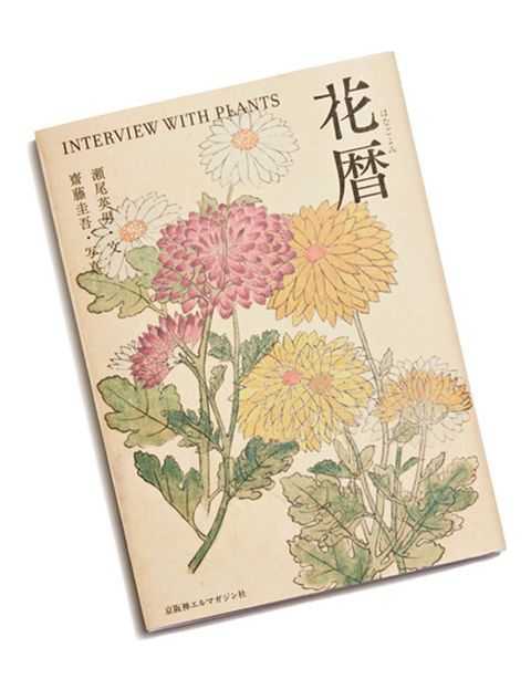 Chrysanths, Flower, Botany, Plant, Floral design, Wildflower, Paper product, Flowering plant, Paper, Aster,
