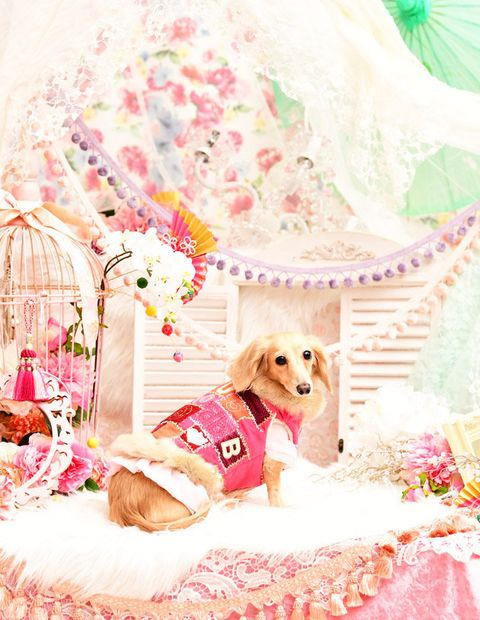 Pink, Canidae, Dog, Room, Puppy love, Companion dog, Plant, Bed,