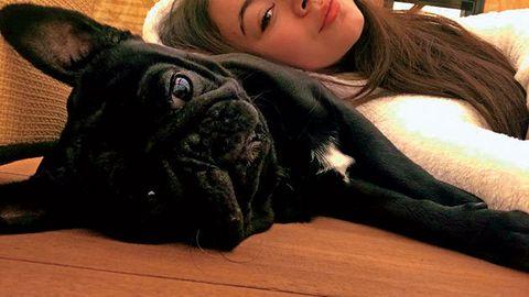 Dog, Mammal, French bulldog, Canidae, Dog breed, Snout, Companion dog, Bulldog, Carnivore, Non-Sporting Group,