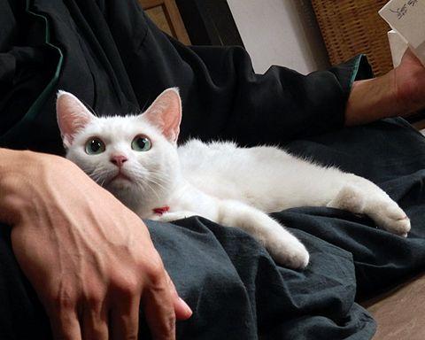 Finger, Felidae, Skin, Cat, Small to medium-sized cats, Whiskers, Comfort, Vertebrate, Carnivore, Wrist,