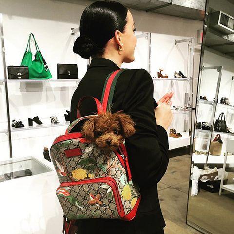 Dog, Shoulder, Canidae, Companion dog, Fashion, Human, Morkie, Dog breed, Carnivore, Terrier,