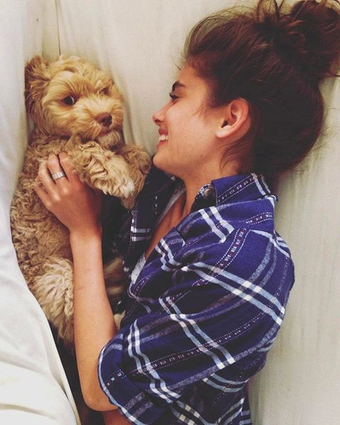 Fur, Companion dog, Canidae, Carnivore, Teddy bear, Gesture, Ear, Puppy love,