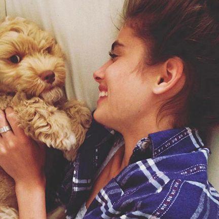 Maltepoo, Dog, Canidae, Puppy love, Puppy, Companion dog, Cockapoo, Morkie, Interaction, Dog breed,