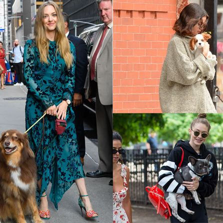 dog, street fashion, canidae, companion dog, fur, fashion, dog walking, dog breed, leash, sporting group,