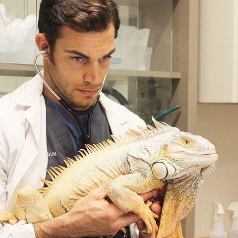 Green iguana, Iguania, Iguana, Iguanidae, Lizard, Reptile, Scaled reptile, Jaw, Mouth,