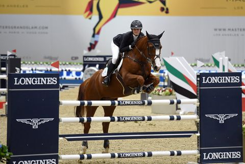 Horse, Show jumping, Bridle, Halter, Sports, Animal sports, Rein, Jumping, Eventing, English riding,