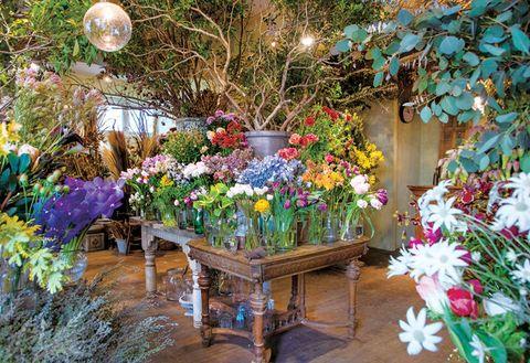 Flower, Floristry, Plant, Garden, Botany, Spring, Floral design, Cut flowers, Flower Arranging, Annual plant,