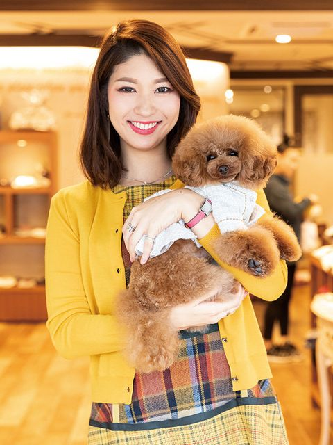 Fur, Yellow, Companion dog, Dog, Canidae, Toy Poodle, Textile, Teddy bear, Stuffed toy, Puppy love,