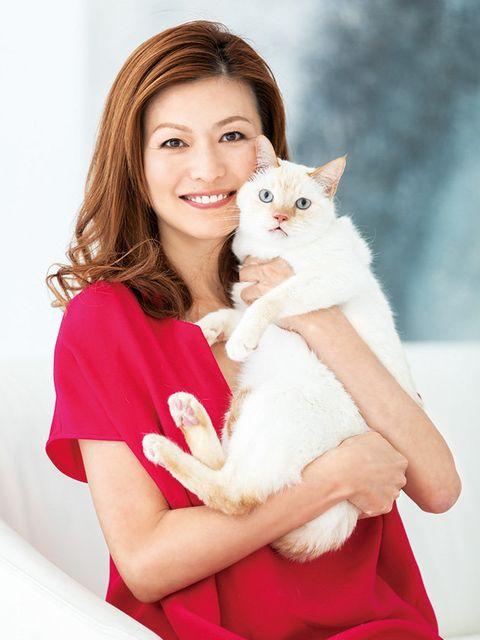 Cat, Felidae, Skin, Small to medium-sized cats, Beauty, Turkish van, Turkish angora, Carnivore, Sitting, Photography,