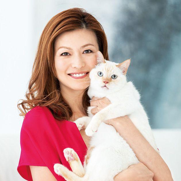 Cat, Felidae, Small to medium-sized cats, Skin, Beauty, Turkish van, Carnivore, Turkish angora, Sitting, Photography,