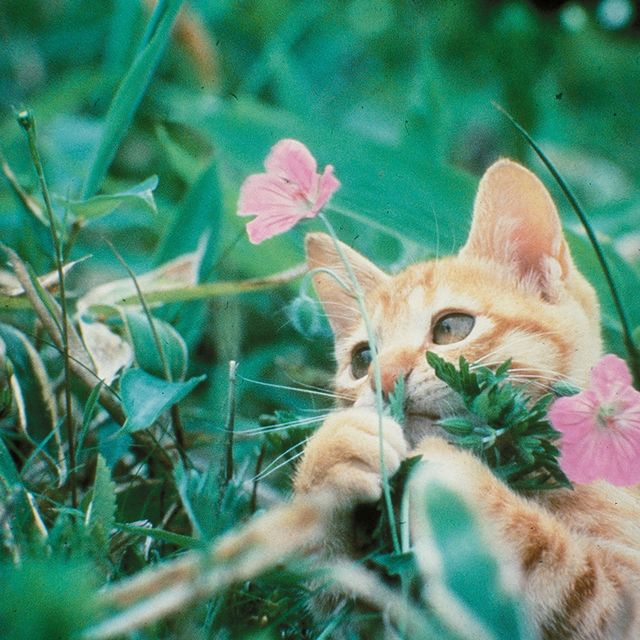 Cat, Mammal, Felidae, Green, Small to medium-sized cats, Grass, Carnivore, Whiskers, Organism, Plant,