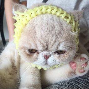 Skin, Carnivore, Vertebrate, Whiskers, Cat, Small to medium-sized cats, Felidae, Fur, Fawn, Kitten,