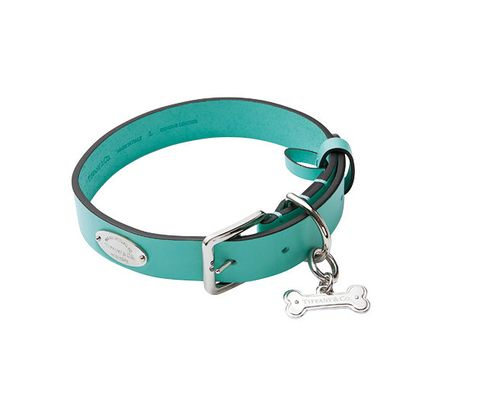 Collar, Dog collar, Turquoise, Leash, Fashion accessory, Pet supply, Turquoise, Bracelet, Leather, Strap,