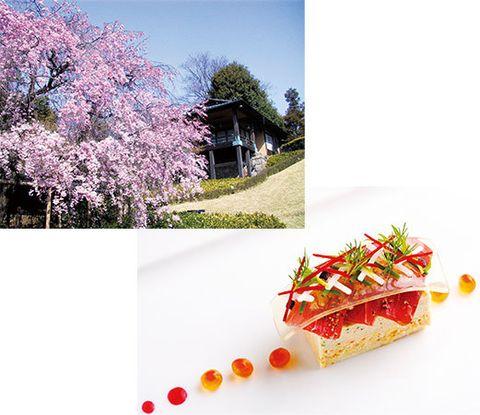 Branch, Food, Ingredient, Petal, Purple, Garnish, Lavender, Blossom, Twig, Cuisine,