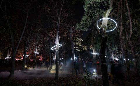 Nature, Night, Darkness, Lighting, Light, Tree, Street light, Midnight, Light fixture, Branch,