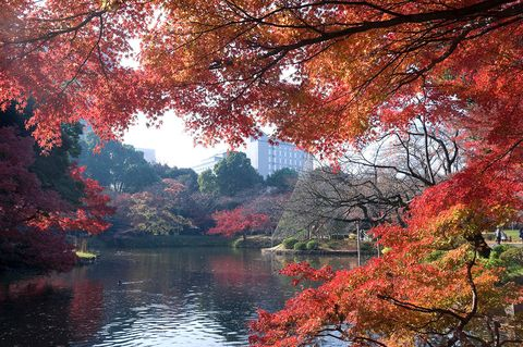 Tree, Nature, Natural landscape, Leaf, Red, Reflection, Sky, Autumn, Woody plant, Deciduous,