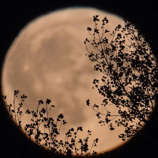 Sky, Circle, Photography, Tree, Night, Plant, World,