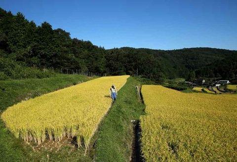 Nature, Plant, Agriculture, Farm, Field, Plant community, Natural landscape, Grassland, Plantation, Hill,