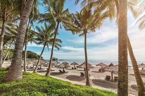 Tree, Palm tree, Sky, Tropics, Arecales, Vacation, Beach, Shore, Sea, Woody plant,
