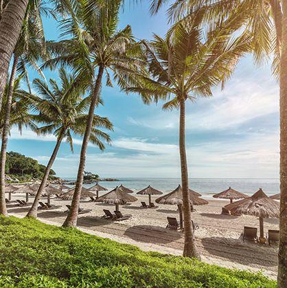 Tree, Palm tree, Sky, Vacation, Tropics, Arecales, Beach, Shore, Sea, Resort,