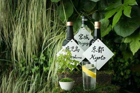 Green, Grass, Plant, Tree, Herb, Wildflower,